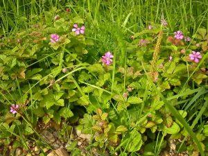 planten-07